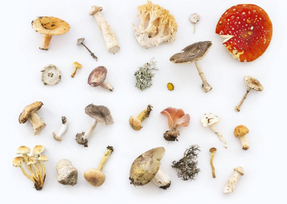 Introduce These 7 Mushrooms to Your Diet to Boost Your Immunity