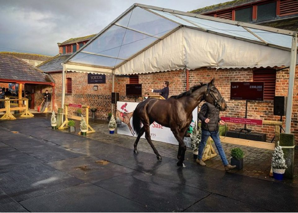 Will These Record-breaking Horses Be worth the Money